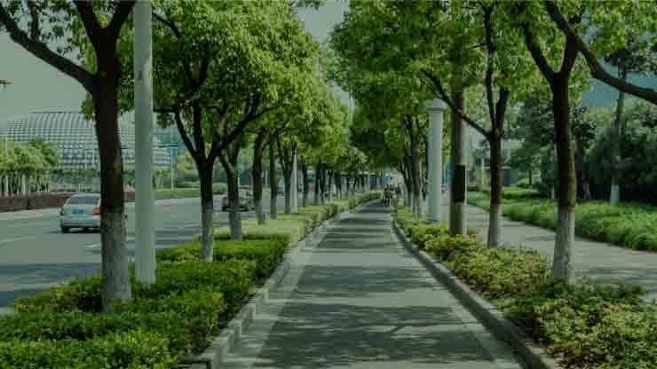 Valoración monetaria de árboles urbanos