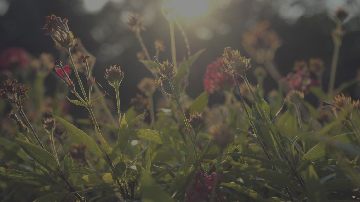 Flora urbana