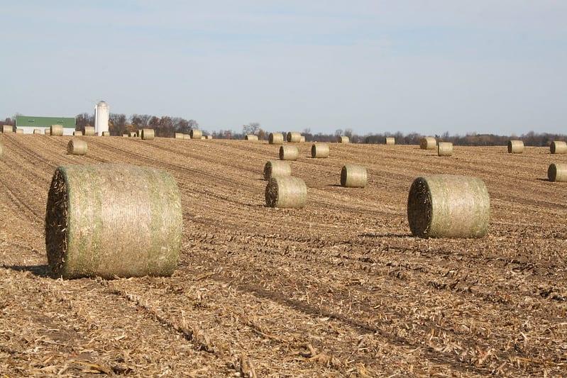 Bioenergía, una apuesta estratégica de empresas agroindustriales